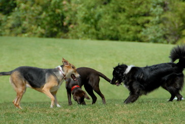 Flower Mound approves town's first dog park
