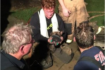 Puppy rescued from fire given oxygen with dog mask