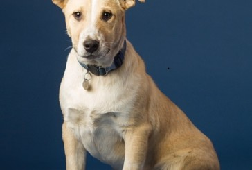 Flower Mound's humane society sends 1,000th dog through Love on Wheels program