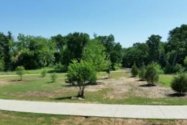 Lantana adds trees