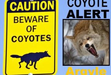 Argyle urges caution, coyotes suspected in area