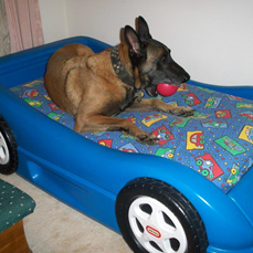 Frisco in his car bed (Photo Courtesy: Stella)