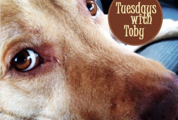 Tuesdays with Toby: Part of a family