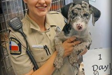 Clear The Shelters event helping DFW pets find homes