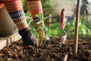 Fall-Gardening