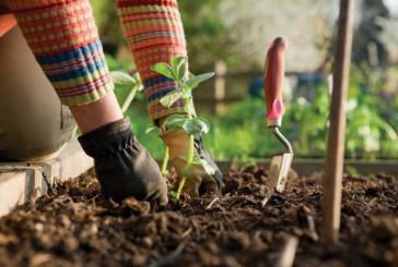 Fall forward for better gardening