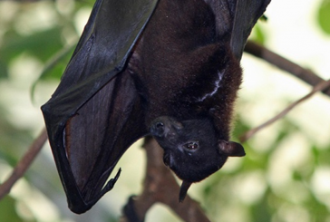 Go batty at the library