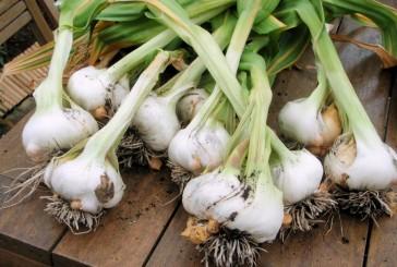 Parlez-vous garlic?