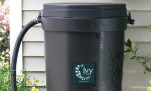 Ivy rain barrel