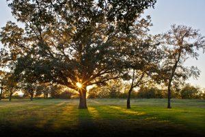 2013-11-13_Heritage_Park trees