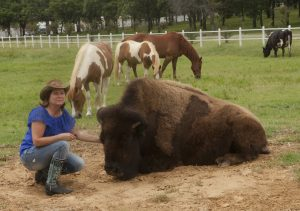 Mari Beth Connor of Flower Mound and Bullet the bison. (Photo by Helen's Photography)