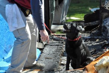 FMFD acquires specially trained fire dog