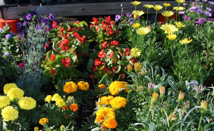 Gardening: Hot and cold — Thermoperiods