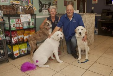 Dogs are family at Canine Courtyard