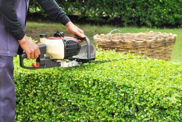 Flower Mound now offering free green waste disposal