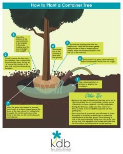 kdb_how-to-plant_tree24x30