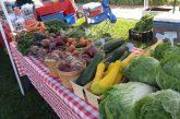 Denton Community Market to open Saturday