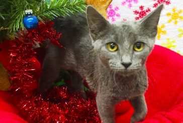 Flower Mound Animal Services launches annual 'Paws N Claus' fundraiser