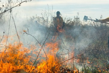 FMFD to conduct partial prescribed burn on The Flower Mound