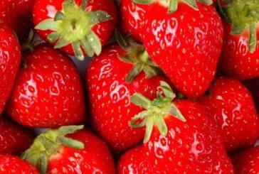 Gardening: Succulent Sweet Strawberries