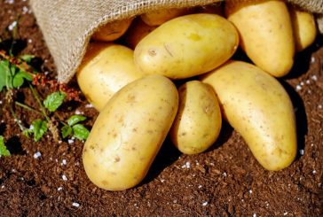 Gardening: A second crop of fruits and vegetables