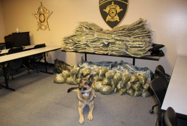 During traffic stop, DCSO uncovers 175 pounds of pot