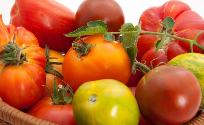 Um-um, good homegrown tomatoes