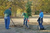Flower Mound to give away trees for Arbor Day