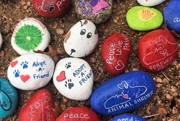 Flower Mound Animal Services hosting rock painting event