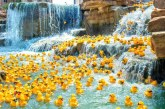 20,000 rubber ducks to race in annual River Walk fundraiser
