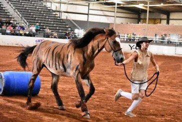 FFA students show horse sense by training wild mustangs