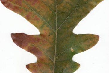 Make like a tree, and leaf!