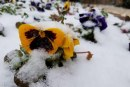 C. Stroup: Let it snow … really?