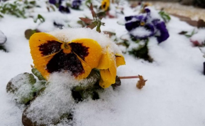 Stroup: Let it snow … really?