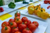 North Texas spring vegetable gardening