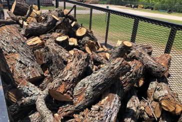 Pecan tree wood to be distributed Saturday
