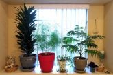 Houseplants 101: Turn your brown thumb into a green thumb
