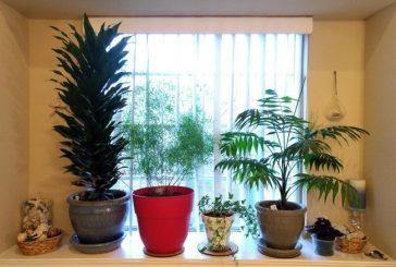 Houseplants 101: Turn your brown thumb into a green thumb