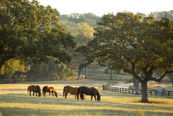 Furst Ranch heading 'back to the drawing board'