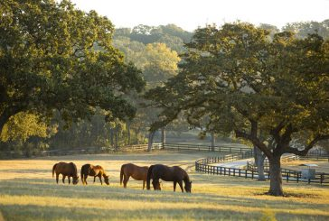 Ranch owners lead vision for future development