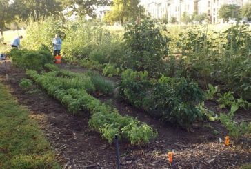 How to join or start a community garden